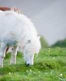 Farm horse in natural agricultural landscape Stock Photography