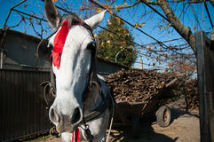Farm horse portrait. In the romanian countyside stock images