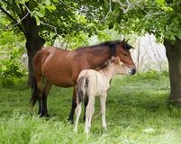 Farm horse. Standing on a meadow royalty free stock photo