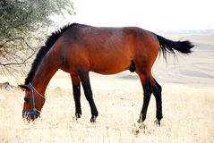Farm horse. In warm sunlight stock image