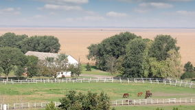 Farm with horses stock video