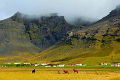 Farm Horses in Suourland, Iceland. Horses in a field in front of a farm with white buildings and red roofs at the foothills of a mountain in South Region Stock Images
