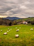 Farm house of the Basque Country with a flock of sheep on a cloudy day. Bermeo stock photo