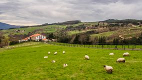 Farm house of the Basque Country with a flock of sheep on a cloudy day. Bermeo royalty free stock photography