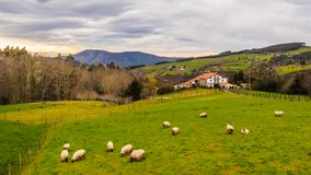 Farm house of the Basque Country with a flock of sheep on a cloudy day. Bermeo royalty free stock photo