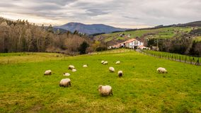 Farm house of the Basque Country with a flock of sheep on a cloudy day. Bermeo stock photos