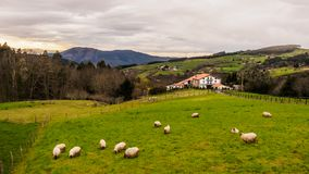 Farm house of the Basque Country with a flock of sheep on a cloudy day. Bermeo stock image