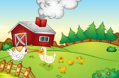 Farm house and birds. Illustration of a farm house, hen and duck Stock Photo