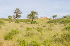 Farm house with cow, Cork tree forest and Esteva flowers in Vale. Seco, Santiago do Cacem, Alentejo, Portugal Stock Photography