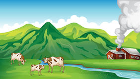 A farm house and cows Stock Photo