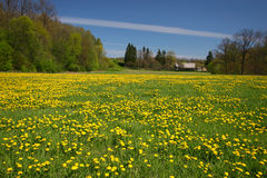 Farm house in the end of dandelion meadow Royalty Free Stock Images