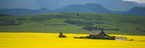 Farm house in field of canola Stock Photo
