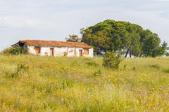 Farm house with  flowers and pine trees in Vale Seco, Santiago d. O Cacem, Alentejo, Portugal Stock Images