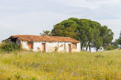 Farm house with  flowers and pine trees in Vale Seco, Santiago d. O Cacem, Alentejo, Portugal Stock Photography