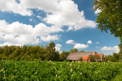 Farm house in landscape with potatoes Royalty Free Stock Photography