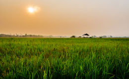 Farm house morning. Farm house at cornfield ,Nan Thailand Royalty Free Stock Photography