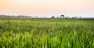 Farm house morning. Farm house at cornfield ,Nan Thailand Royalty Free Stock Photos