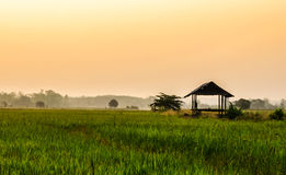 Farm house morning. Farm house at cornfield ,Nan Thailand Stock Image