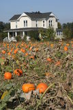 Farm house pumpkin patch Stock Photography