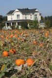 Farm house pumpkin patch Stock Photography