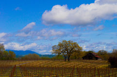 Farm House in Sonoma County. Tree and Farm house in Sonoma county. Vineyard foreground and clouds and blue sky in the background Royalty Free Stock Photo