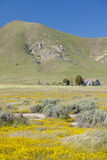 A farm house surrounded by spring yellow flowers, desert gold and various flowers in the Carrizo National Monument, Southern Calif Stock Photography