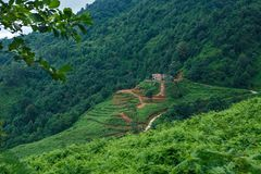 Georgia Ajara summer Kvariati lonely farm on the mountain stock photography