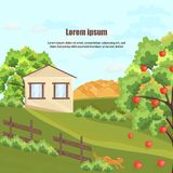 Farm house Vector. Apple tree and grass. Nature beautiful green yard backgrounds. Farm house Vector. Apple tree and grass. Nature beautiful green yard background Royalty Free Stock Image