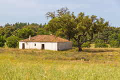 Farm house with  wheat plantation and trees in Vale Seco, Santia. Go do Cacem, Alentejo, Portugal Royalty Free Stock Photos