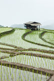 The farm hut in rice field Royalty Free Stock Images