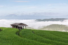 The farm hut in rice field Stock Images
