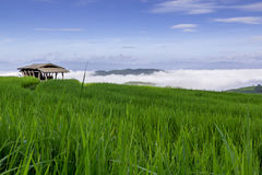 The farm hut in rice field Stock Photos