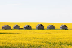 Farm huts canola field agriculture landscape Stock Image