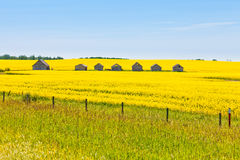 Farm huts canola field agriculture landscape Stock Images