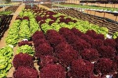 Farm of Hydroponic Plantation Royalty Free Stock Photo