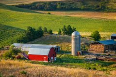 Farm in Idaho with wheat fields and red barn Royalty Free Stock Photo