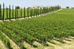 Free Farm In Umbria Stock Images - 23520724