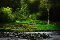 The farm of indonesia royalty free stock images