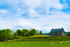 Farm in Ireland. Farmhouse with red door, surrounded by green trees with sheep on field under dramatic blue cloudy sky, Ireland Royalty Free Stock Photos