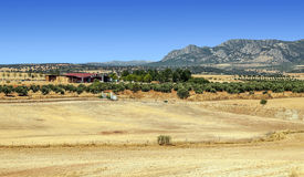 Farm of Jaen Royalty Free Stock Photos