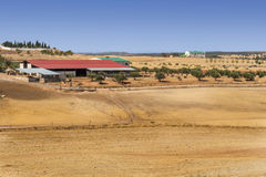 Farm of Jaen Royalty Free Stock Photography