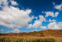 Farm. In Jilin Province, China Stock Image