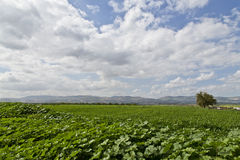 Farm in Jordan in spring. Beautiful view of the farm in Jordan in spring Royalty Free Stock Photography