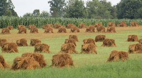 Farm. Just thought this field of hay was beautiful Stock Images