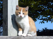 Farm kitten Stock Image