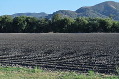 Farm Land. Rows of Farmland with mountains and trees in the background stock image