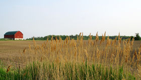 Farm land. With gold grass royalty free stock photos