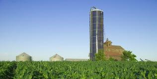 Farm Land. A corn field surrounding a farm house Royalty Free Stock Photos