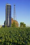 Farm Land. Corn fields surrounding a barn house Royalty Free Stock Photo