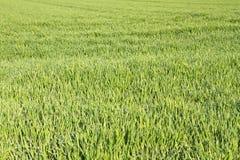 Farm land in Bavaria Royalty Free Stock Photo